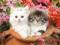 نازترین بچه گربه ها