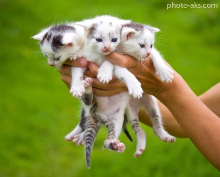 عکس بچه گربه های ناز cute cats wallpapers