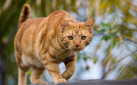 عکس نگاه گربه در حال شکار cat hunting