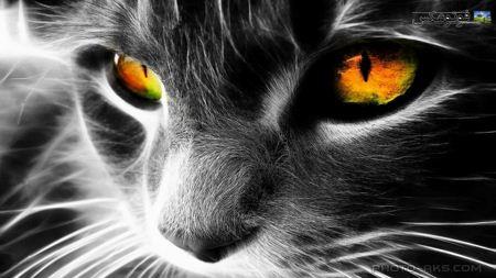 والپیپر فانتزی گربه سیاه black cat face
