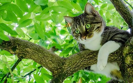 عکس گربه روی شاخه درخت cat on tree