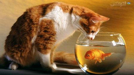      red fish tank vs cat