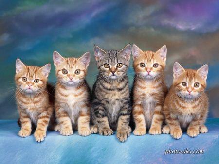 عکس گربه ها cats photo gallery