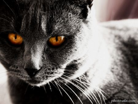 گربه سیاه black and dark cat