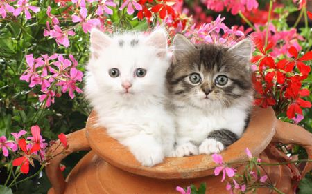نازترین بچه گربه ها bache gorbe naz