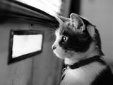 بچه گربه منتظر