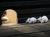 عکس بامزه از موش و گربه