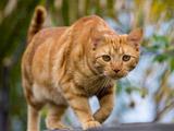 عکس نگاه گربه در حال شکار