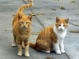 عکس دو گربه شهری