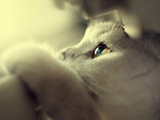 عکس چشمان گربه