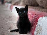 بچه گربه سیاه بامزه