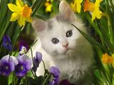 بچه گربه سفید میان گلها
