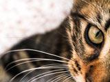 والپیپر زیبا از چشمان گربه