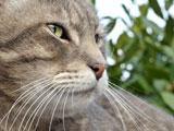 عکس پوزه و سبیل گربه