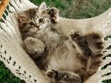 عکس گربه در حال چرت زدن