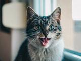 عکس گربه وحشت زده خاکستری
