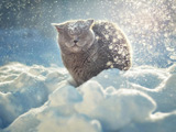 عکس گربه زیر بارش برف