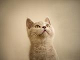 نگاه گربه ناز