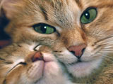 عکس گربه و بچه گربه کنار هم