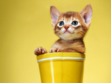 عکس بچه گربه بامزه داخل سطل
