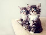 عکس بچه گربه های خوشگل و ملوس