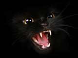 عکس گربه سیاه خشمگین