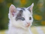 عکس صورت گربه خال خالی