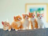 گربه های خال خالی روی مبل