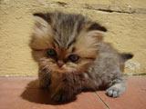 عکس بچه گربه ملوس کوچولو