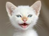 عکس بچه گربه سفید