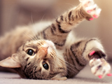 خمیازه گربه