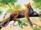 نقاشی زیبا از پلنگ وحشی