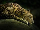 والپیپر بسیار زیبا یوزپلنگ