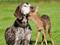 دوستی و محبت در حیوانات