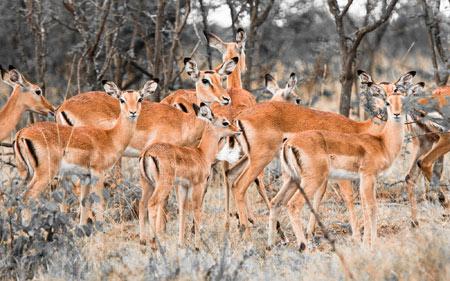 عکس گله آهو و گوزن ها herd of deer wallpaper