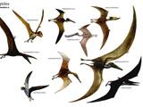 عکس و نام دایناسورهای پرنده