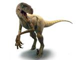 دایناسور دزد چابک یا ولاسیرپتر