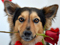 سگ با شاخه گل رز