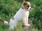 عکس سگ عروسکی