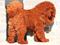 سگ تبتی خوشگل پشمالو