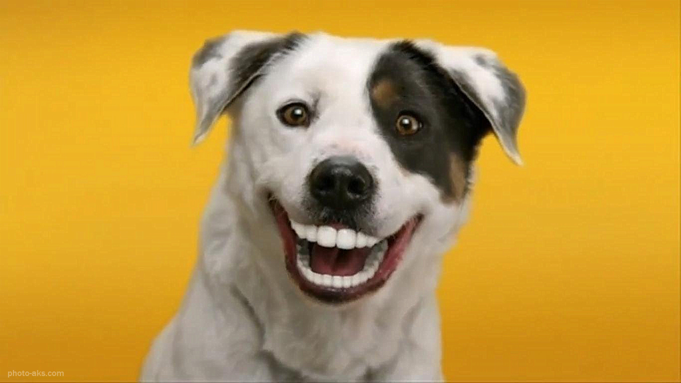 Smiling dogs ruhstorf