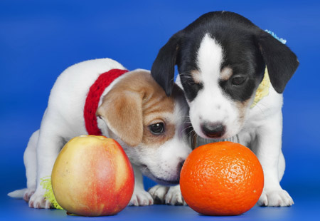 پوستر توله سگ های بامزه کوچولو dogs puppies wallpaper