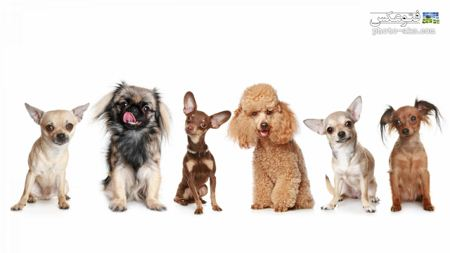 نژاد های مختلف سگ ها dogs wallpapers