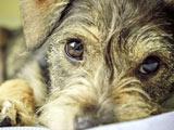 عکس نگاه سگ بامزه