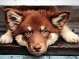 نگاه سگ خوشگل ناز