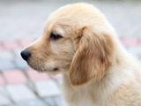 عکس زیبای سگ غمگین