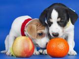 پوستر توله سگ های بامزه کوچولو