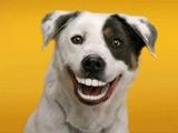 عکس بامزه لبخند سگ