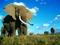 والپیپر فیل های افریقایی