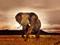 سایت عکس فیل ها
